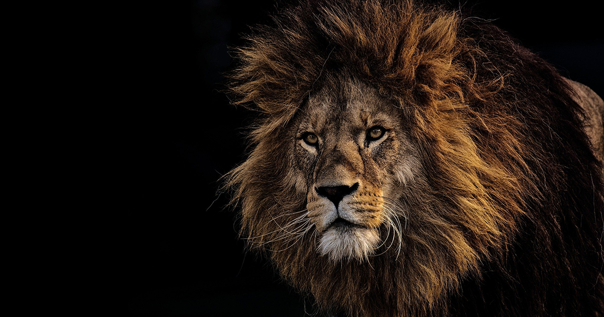 Alphamann - Titelbild Löwe