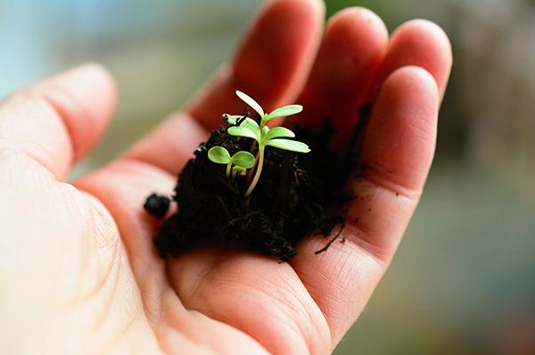 Pflanzen müssen gedeihen